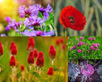 春天漂亮花朵拍摄高清图片