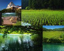 春天自然綠色風光拍攝高清圖片