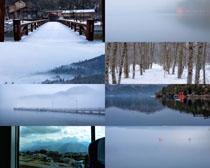 树木旅游景点风景拍摄高清图片