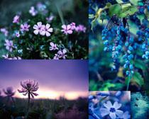 春天美丽花朵叶子摄影高清图片