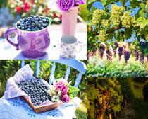新鲜葡萄水果摄影高清图片