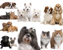 可爱宠物小狗拍摄高清图片