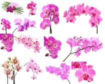 粉色美丽花朵拍摄高清图片
