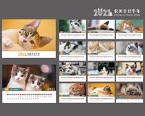 2021宠物猫台历设计矢量素材