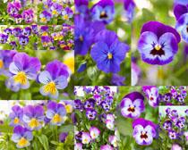 春天紫色花朵拍摄高清图片