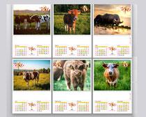 2021水牛实照牛年挂历矢量素材