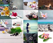 石頭花朵養生寫真攝影高清圖片