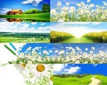 阳光蓝天花草摄影高清图片