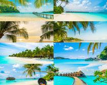 美麗海灘椰樹風光攝影高清圖片