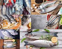 生鮮海魚攝影高清圖片