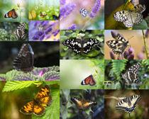 漂亮春天蝴蝶与花朵拍摄高清图片