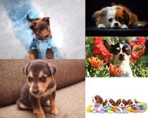 聰明可愛小狗攝影高清圖片