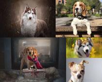 寵物狗寫真拍攝高清圖片