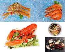 澳洲大龍蝦美食攝影高清圖片