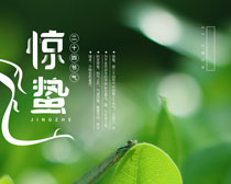 立春谷雨惊蛰海报PSD素材