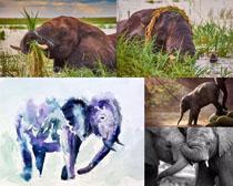 大象动物拍摄高清图片