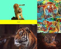 凶猛老虎高清写真拍摄图片