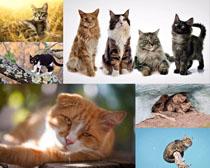 國外各類貓咪寫真拍攝高清圖片