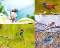 樹枝上的翠鳥寫真攝影高清圖片