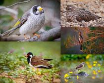 花草鳥類寫真拍攝高清圖片