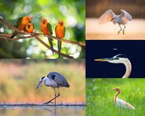 蒼鷺動物寫真拍攝高清圖片