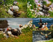 花草海鳥寫真拍攝高清圖片