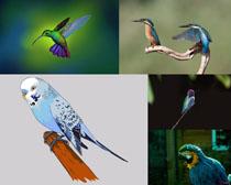 漂亮的蜂鳥與鸚鵡攝影高清圖片