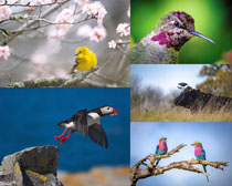 蜂鳥與花朵拍攝高清圖片