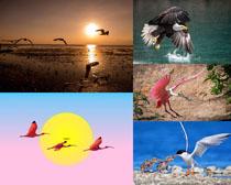 老鷹海鳥寫真拍攝高清圖片