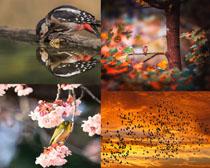 春天花朵小鳥攝影高清圖片