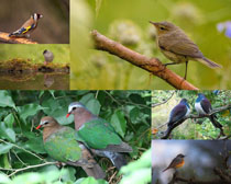 漂亮的枝頭鳥寫真拍攝高清圖片