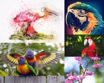 鸚鵡鳥類寫真拍攝高清圖片