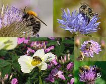 春天花朵小蜜蜂攝影高清圖片
