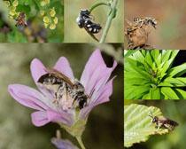 花朵花粉采蜜蜜蜂攝影高清圖片