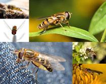 高清小蜜蜂攝影高清圖片