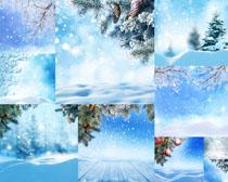圣誕雪景樹攝影高清圖片