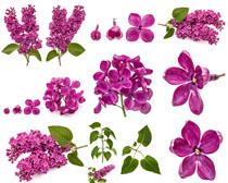 美丽的粉红花朵叶子摄影高清图片