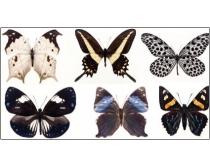 100只漂亮的蝴蝶图片素材