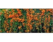 巨幅花卉特写图片素材