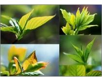 22张翠绿树叶尖高清图片素材
