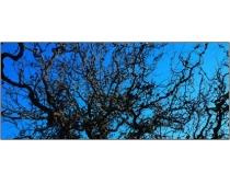 巨幅老树枯枝图片素材