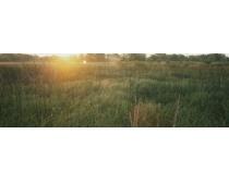 郊外茂密的草丛高清图片素材