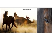 4张高清骏马图片素材