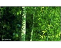 39张高清竹林风光图片素材