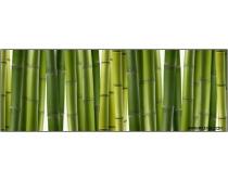 6张高清竹子竹林图片素材