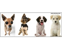 11张高清小狗图片素材
