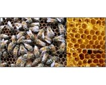 16张高清蜂窝图片素材Honeycomb
