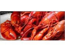 10张高清红皮龙虾图片素材