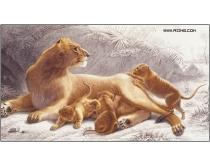 30张高清动物图片素材
