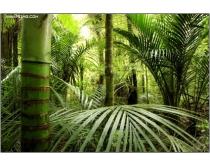 6张高清丛林图片素材